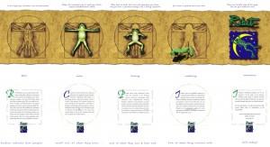 ribit_brochure
